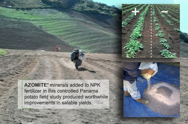 AZOMITE® Potato Trial, Panama